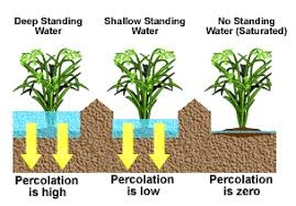Water Percolation Test (knowledgebank.irri.org)