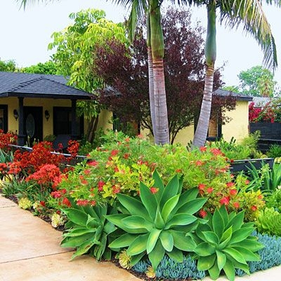 Tropical Garden (pintrest.com)