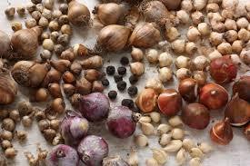 An assortment of Spring Bulbs (brockwellgreenhouses.org.uk)