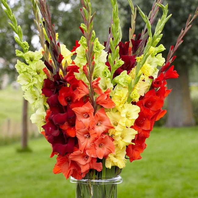 Gladiolas are a beautiful example of corms. (etsy.com)