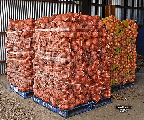 Onions are easy to transport around the world (flickr.com)
