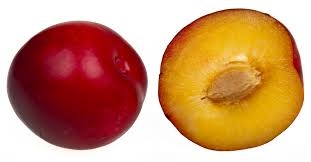 Japanese Plums are Round and Clingstone (en.wikipedia.org)