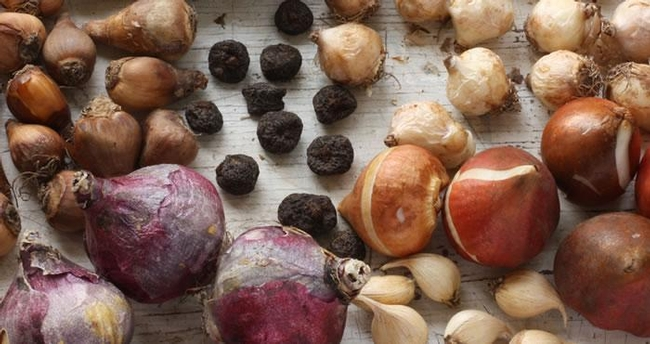 And November is the perfect time to plant spring bulbs (DutchGrown)