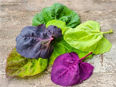 Orach greens, not just green!  (Baker Creek Heirloom Seeds)