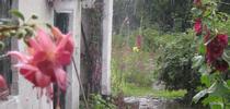 Ever elusive rain. (Pinterest) for Napa Master Gardener Column Blog