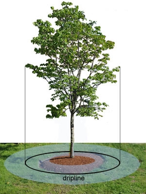 When rains are late, water your trees. (Gardener's Supply)