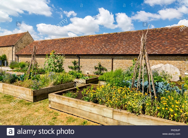 You, too, can have a garden full of flowers and vegetables with careful seed selection, and growing conditions.(alamy)