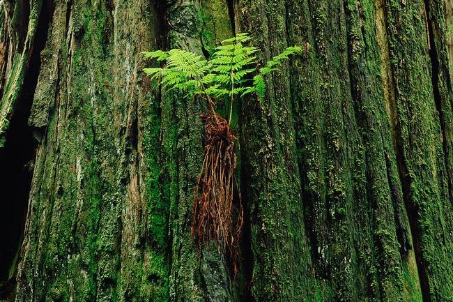 Epiphyte fern (Fine Art America)