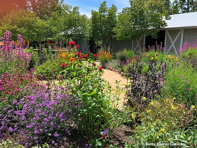 Pollinator garden (UC ANR)