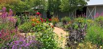 Pollinator garden (UC ANR) for Napa Master Gardener Column Blog