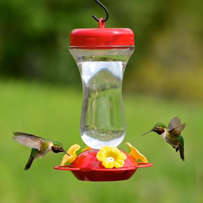 Hummingbird feeder--there are many kinds. (Perky Pet)