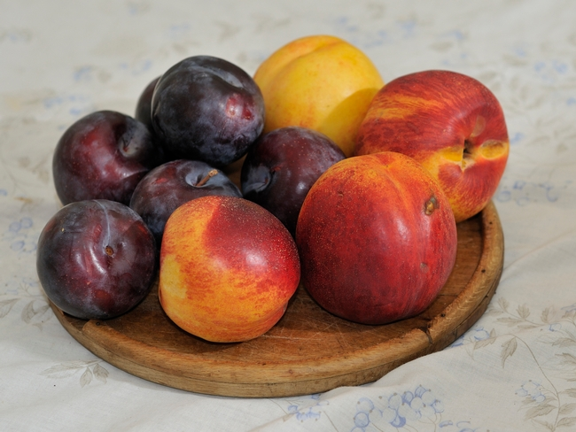 Fresh nectarines and plums (commons.wikimedia.org)