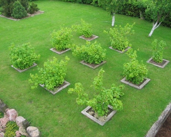 Here are nine small fruit trees, in a small area.  Key point is to keep them small with proper summer pruning. (Pinterest)