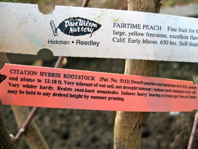 Check the hang tag for all the info. (Dave Wilson Nursery)