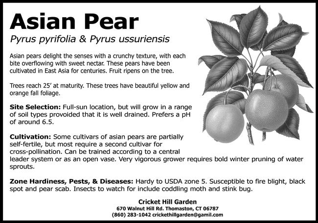 Fruit tree hang tag (crickethillgarden-WordPress.com)