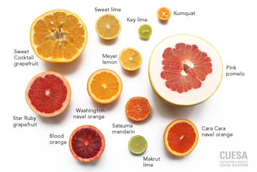 Look at the variety of citrus (kqed)