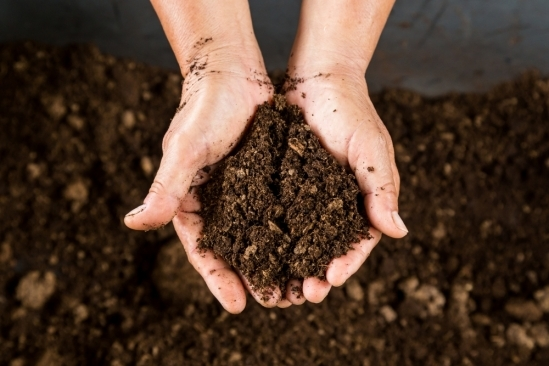 The goal, healthy soil, makes for a healthy garden.  (UCSB)