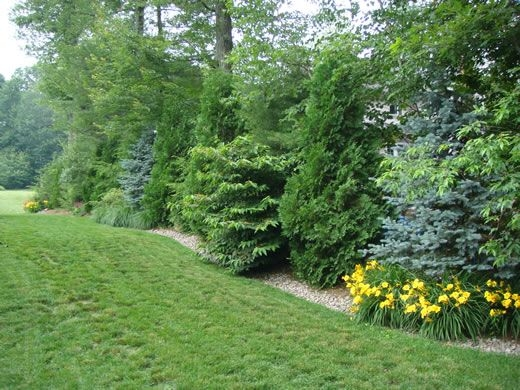 Plants for privacy hedges (Pinterest)
