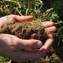 Blog, soil (UC ANR Knowledge Stream Blog)
