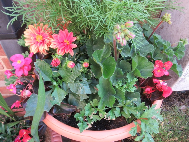 Find a sunny spot for your planted containers and remember to water them (CC BY-NC-SA 2.0, creative commons.org)