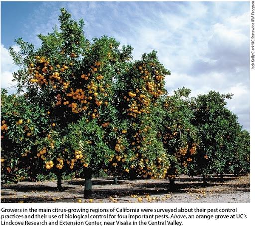 Orange grove (California Agriculture-UC ANR)