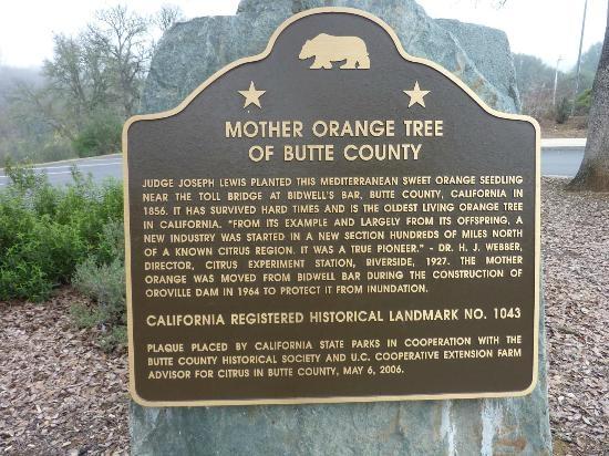 Mother orange tree, Oroville, CA (TripAdvisor)