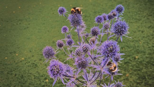 Bees love flowers. (Unsplash/k-mitch-hodge)