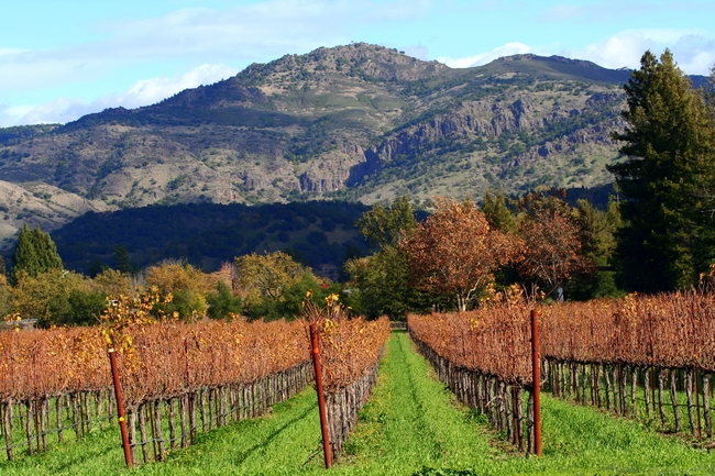 Napa Valley autumn.  By the time the valley looks like this, winter vegetables should be in the ground.  (Wikimedia Commons)