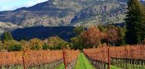 Napa Valley autumn.  By the time the valley looks like this, winter vegetables should be in the ground.  (Wikimedia Commons) for Napa Master Gardener Column Blog