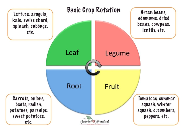 Basic crop rotation.  (The Seasonal Homestead)