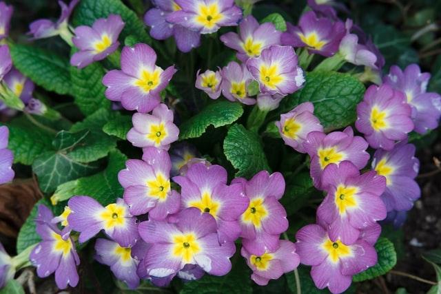 The goal of proper application--beautiful flowers. (markus-winkler-unsplash)