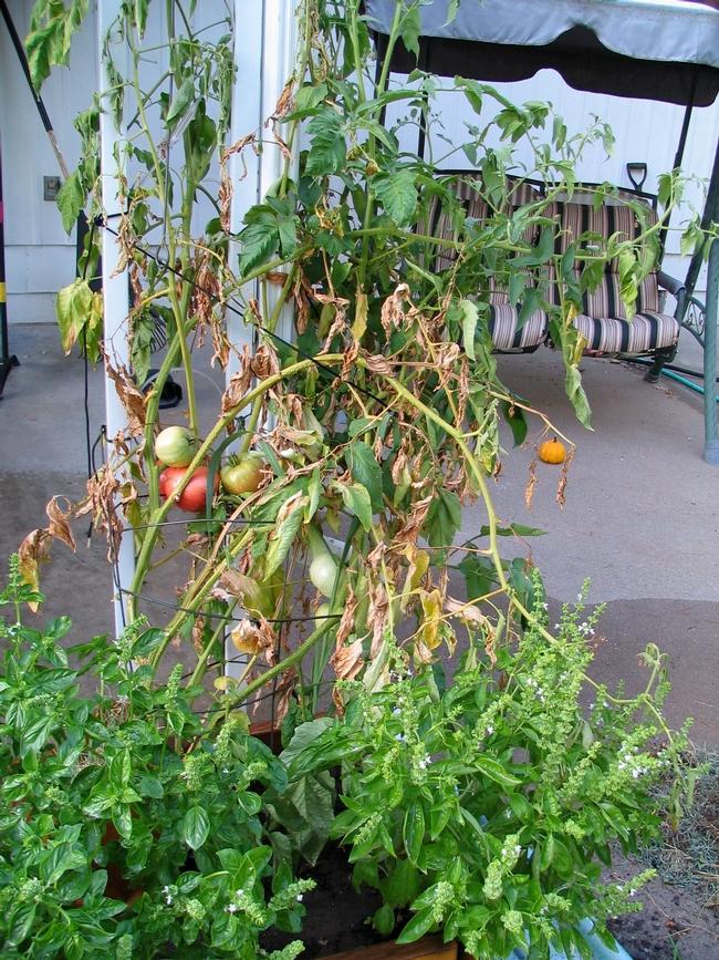 Time to shovel prune. (jimmycrackedcorn.wordpress.com)