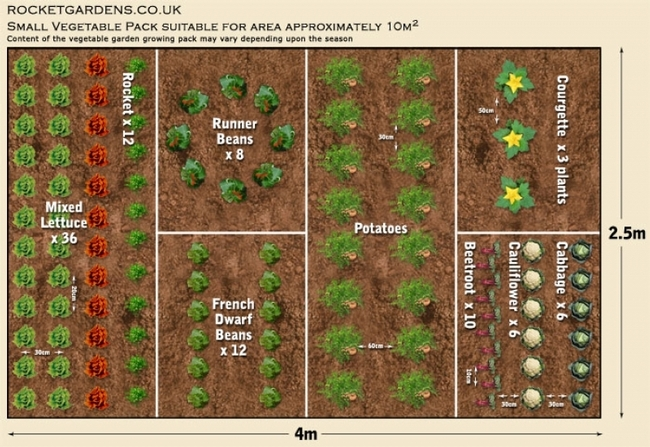 Vegetable planning. (morning chores.com)