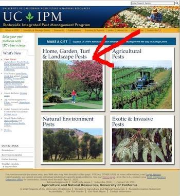 UC IPM home page, trustworthy (ucanr.edu)