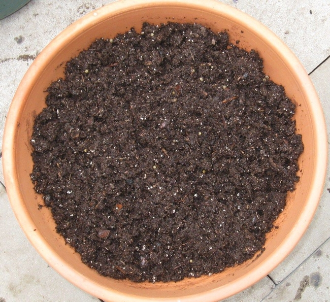 Planting pot filled with potting soil