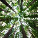 Redwood grove. (arnaud-mesureur-unsplash)