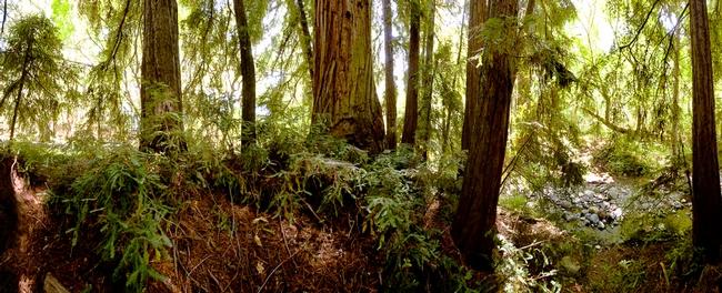 Redwoods at Bothe State Park. (parks.ca.gov)