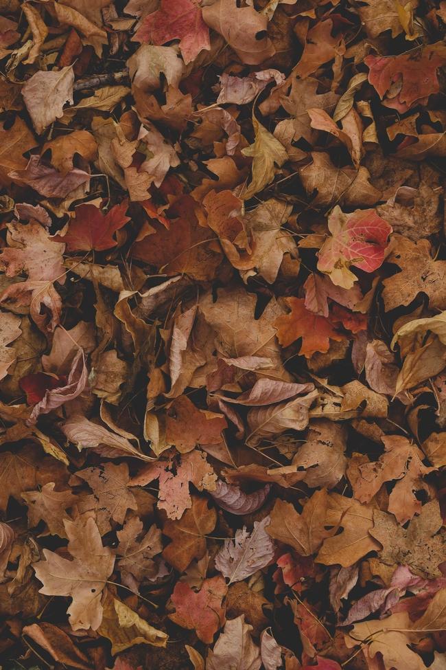 Fall leaves, keep them!  (Courtney Smith Unsplash)