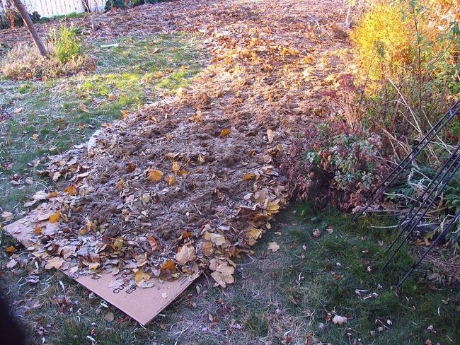 Cardboard with leaves. (gardenprofessors.com)