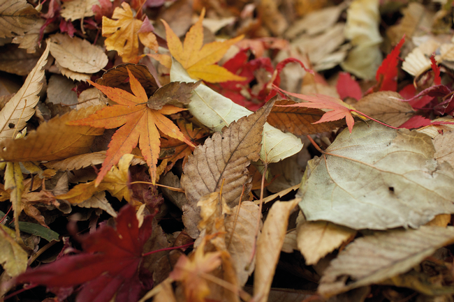Fall leaves, another look. (reuthes.com)