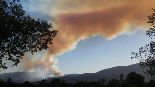Wildfire (larampadinapoli.com)
