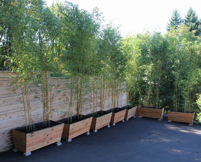 Bamboo (bamboogarden.com)