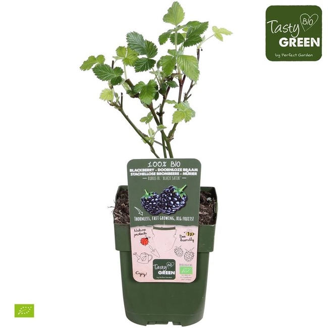 Thornless varieties are available (PerfectGarden.com)