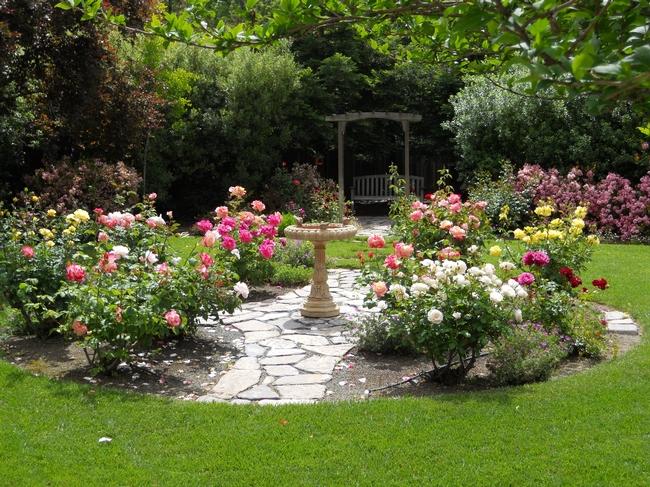 Backyard rose garden. (Pinterest.com)