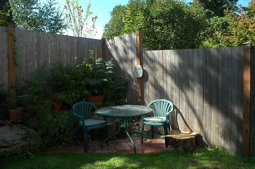 Plant camellias in dappled sunlight or shade. (flickr.com)