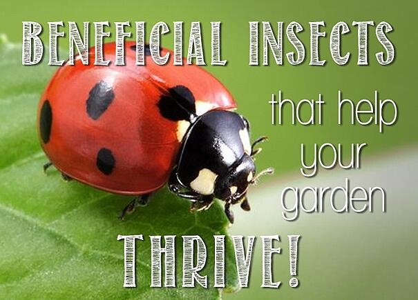 Insects help. (blog.earthbox.com)