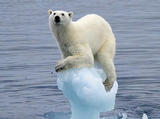 Indicator of polar climate change. (sites.google.com)