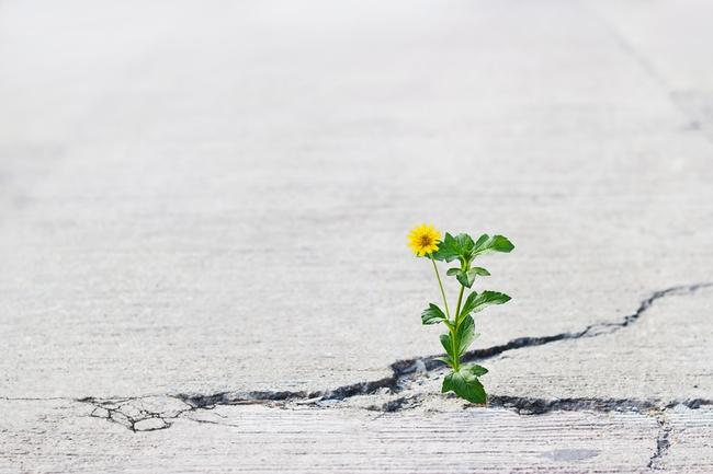 Plants growing in cracks. (aconsciousrethink.com)