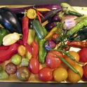 Nightshade vegetables. (naturalhealthtechniques.com)