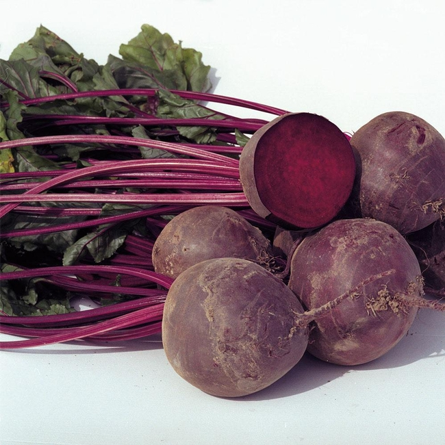 Boro beet, one of our test beets. (harrisseeds.com)